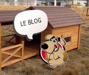 blog-niche-a-chien